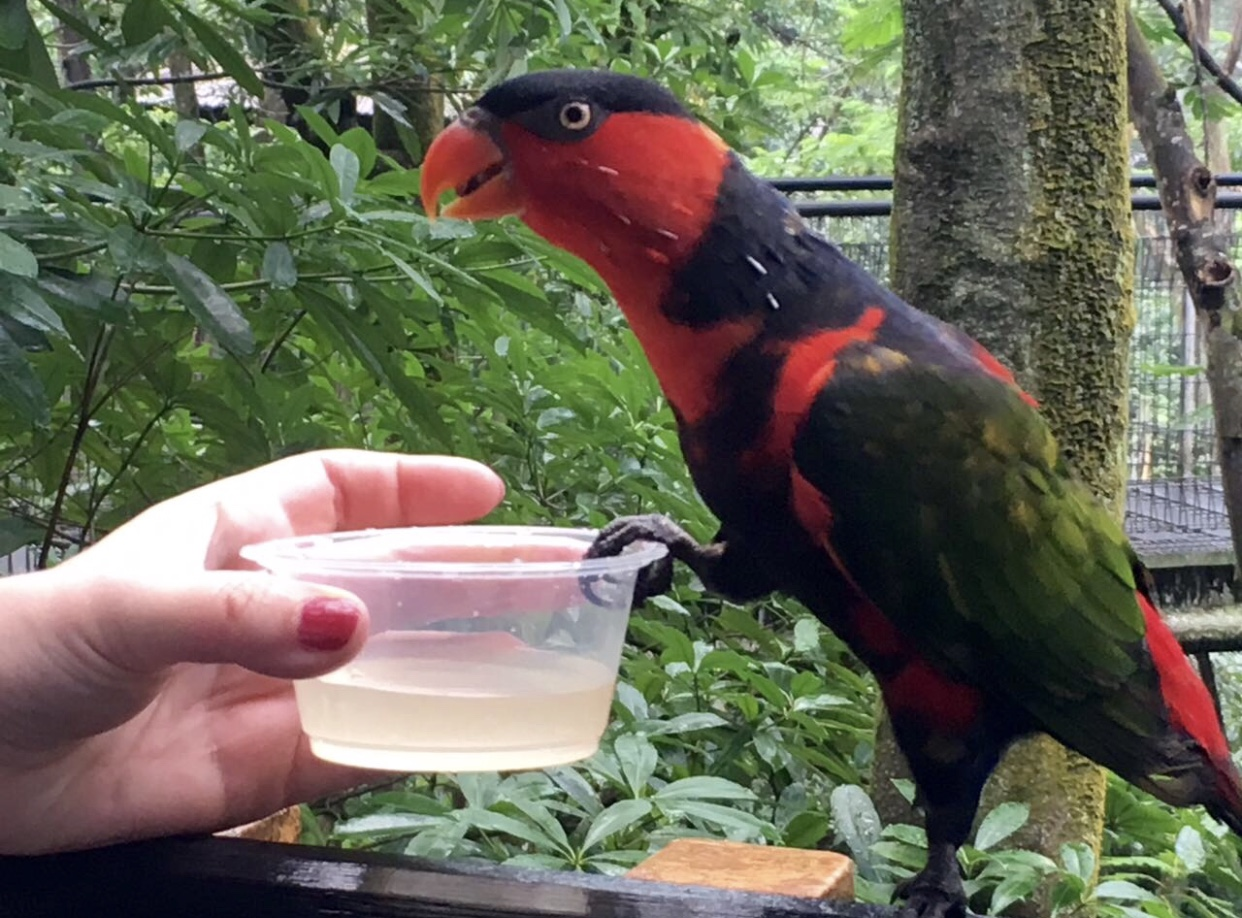 Парк птиц, Сингапур